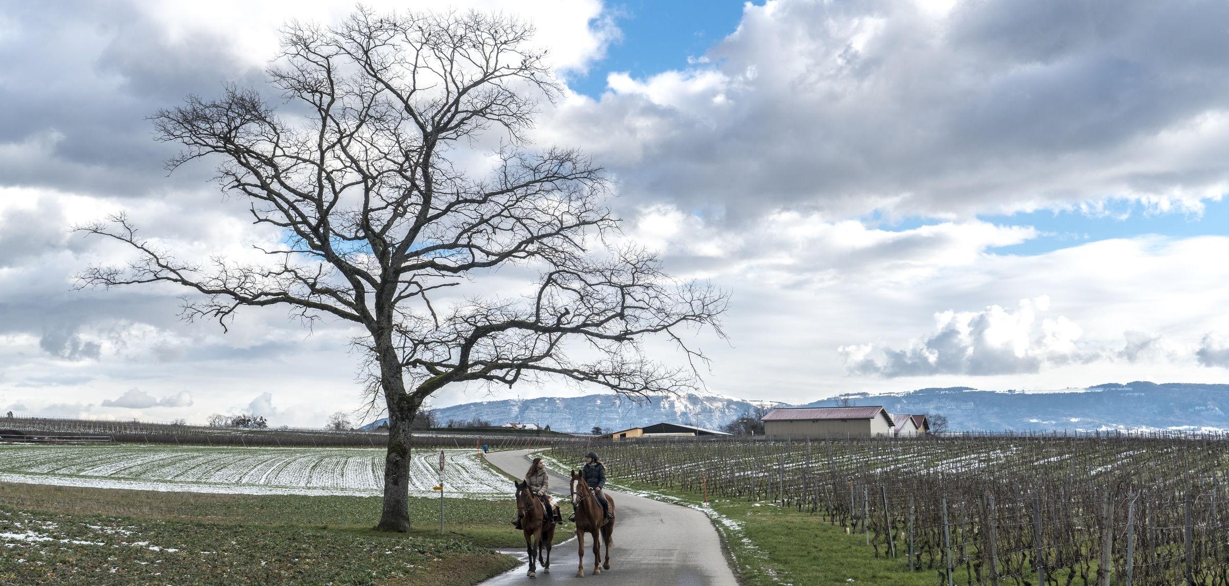 Vigne_champs_chevaux